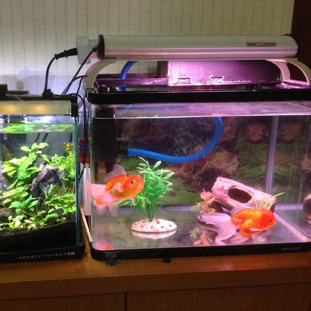 Aquarium Ikan Hias Dan Aquascape Jual Murah Looking For On
