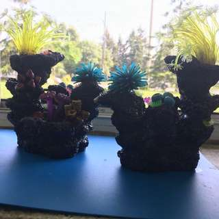 Aquarium Decorations