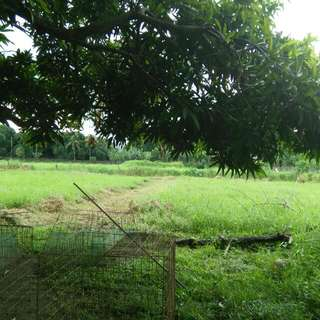 Agriculture Lot for Sale