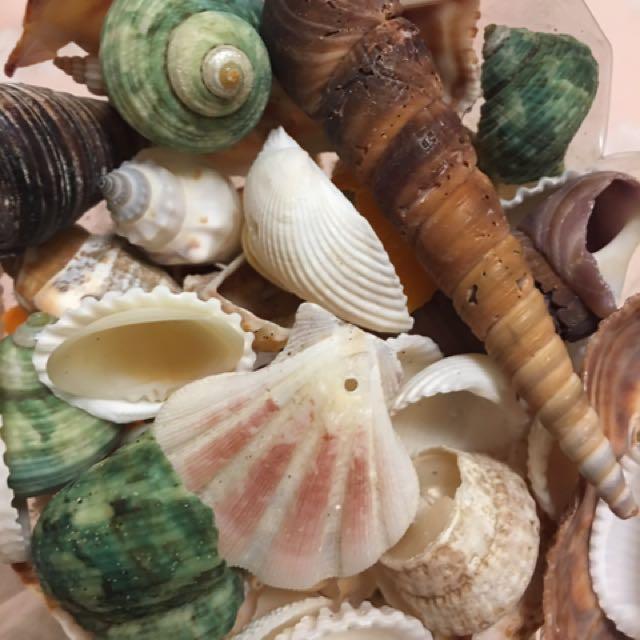 婚紗拍攝,婚紗道具、海邊貝殼