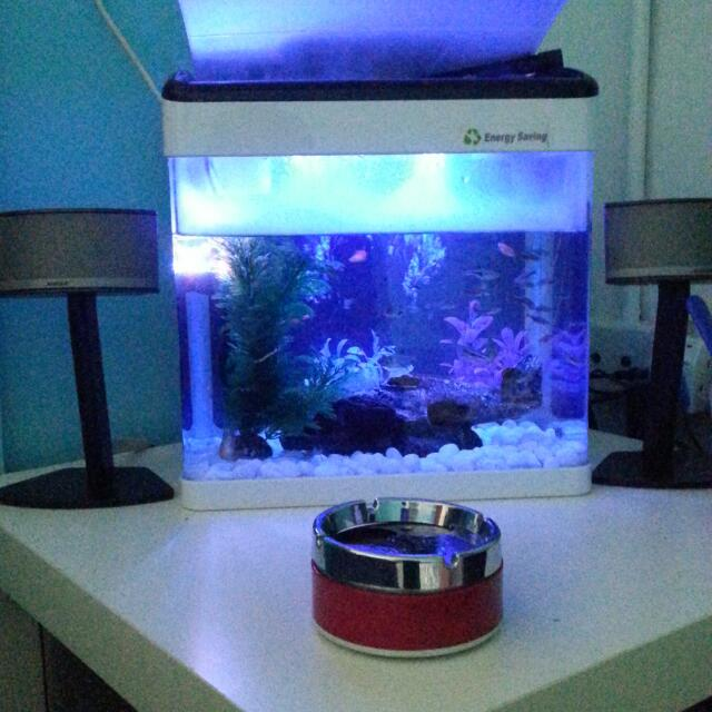 Classica Fish Tank with led light