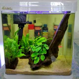 Fish Tank With LED Lights & Filter