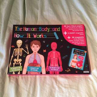 The Human Body And How It Works Magnetic Board