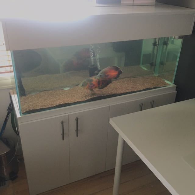 Complete 4ft Aquarium - All Included