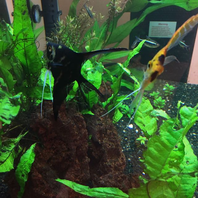 Planted Fish Tank (everything included)