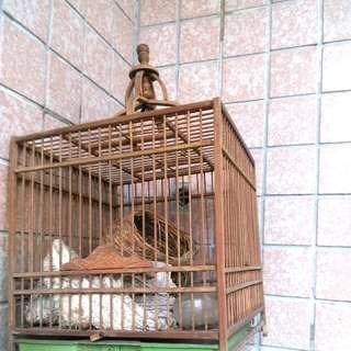 木網鳥籠 送鳥窩