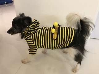 Pet Fashion - Bumblebee