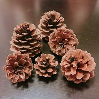 Pine Cone Craft x 6pcs