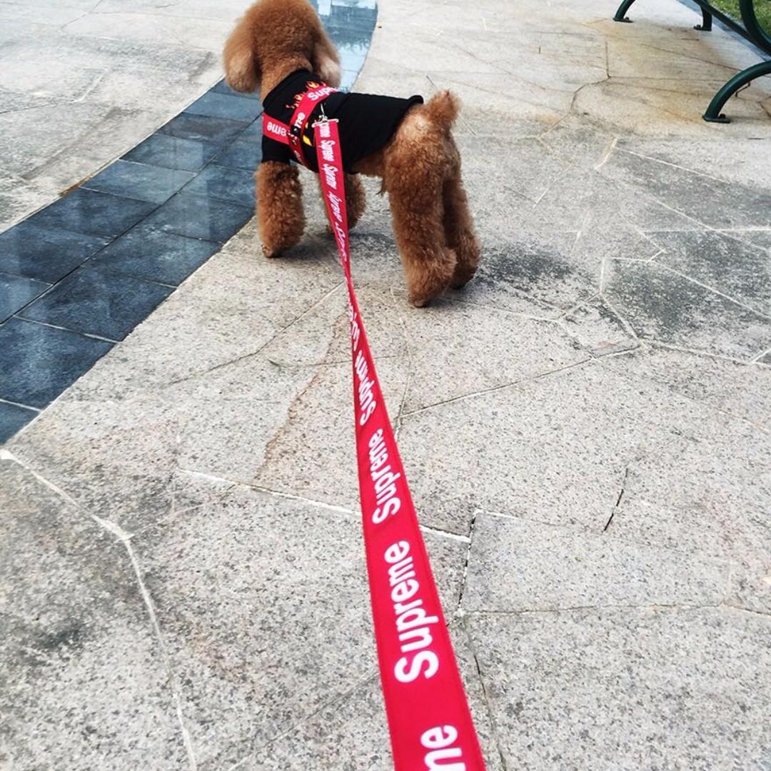 Supreme Dog Collar And Leash - Just Me And Supreme