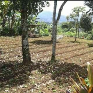 Tanah Di Ciwidey Bandung 700 M2 Swrtifikat Hak Milik