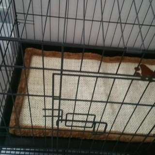Pets cage(big) For Cats/kittens/puppies
