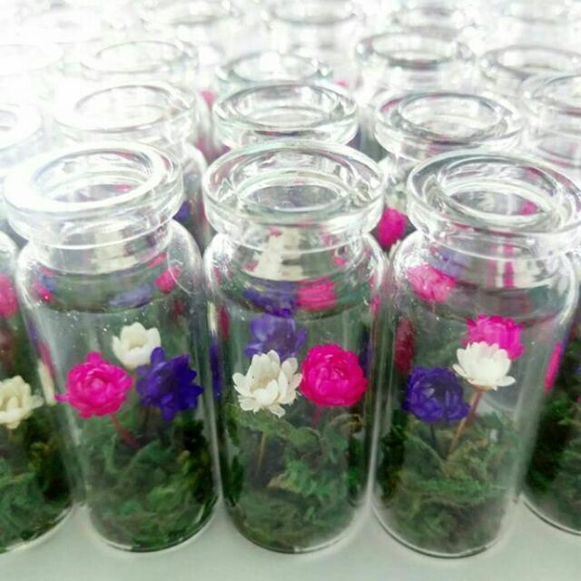 3 pcs Preserved Chrysanthemums In Vial 🌹🌹🌹