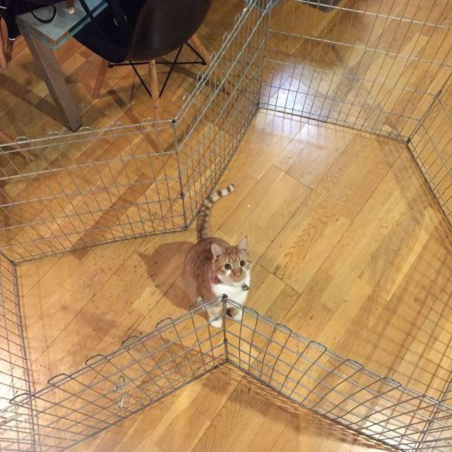 dog/cat cage/play pen