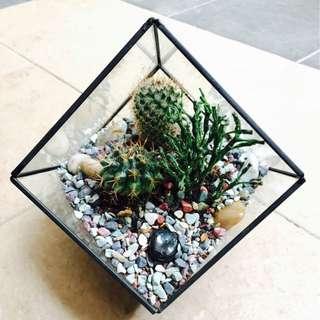 Terrarium Cube Design Copper Frame Black)