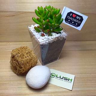 Teacher's Day/ Special! Perfect Gift for all Occasions Birthday/ Congrats/ Farewell/ House warming/ Event Gifts- Real Plant Succulents/ Cactus Terrarium