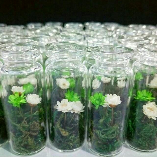 3 Pcs Preserved Chrysanthemums In A Vial 🌹🌹🌹