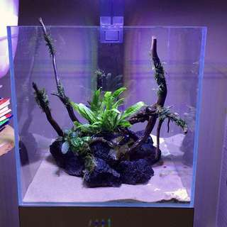 1ft Planted Tank