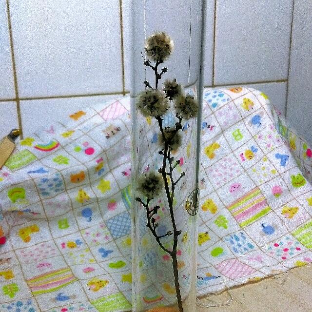 居家擺飾-乾燥花試管擺飾