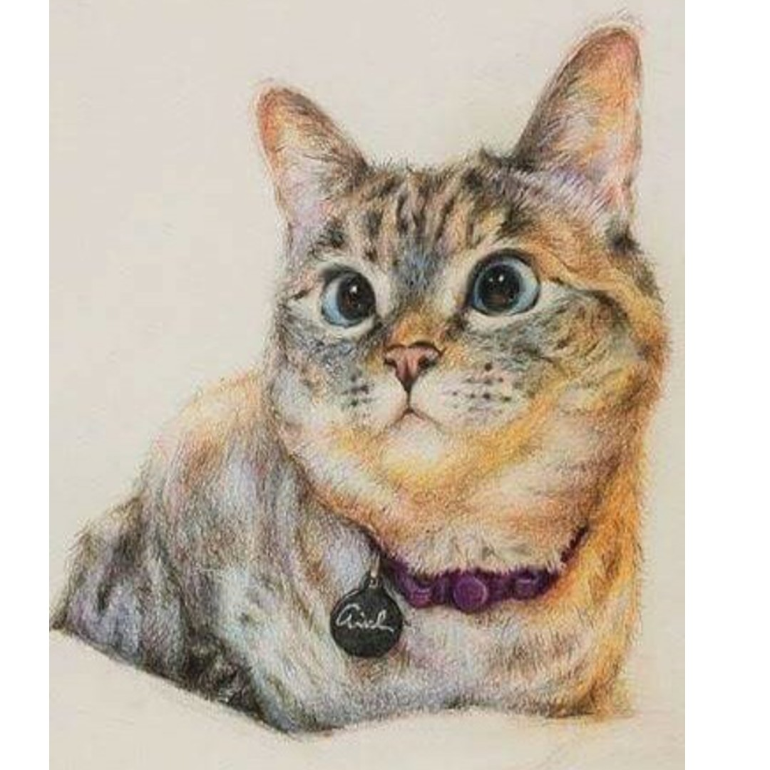 色鉛筆 寵物客製化 圖畫