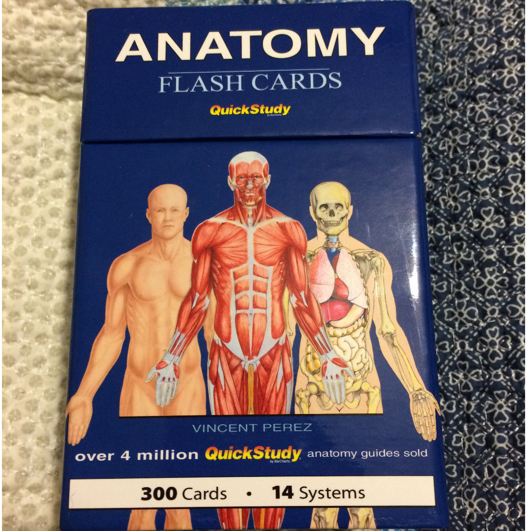 Anatomy Flashcards Books Stationery Others On Carousell