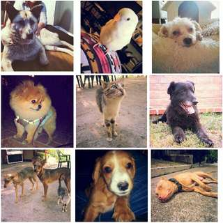 Are you looking for a Pet Sitter or dog walker? I'm Available