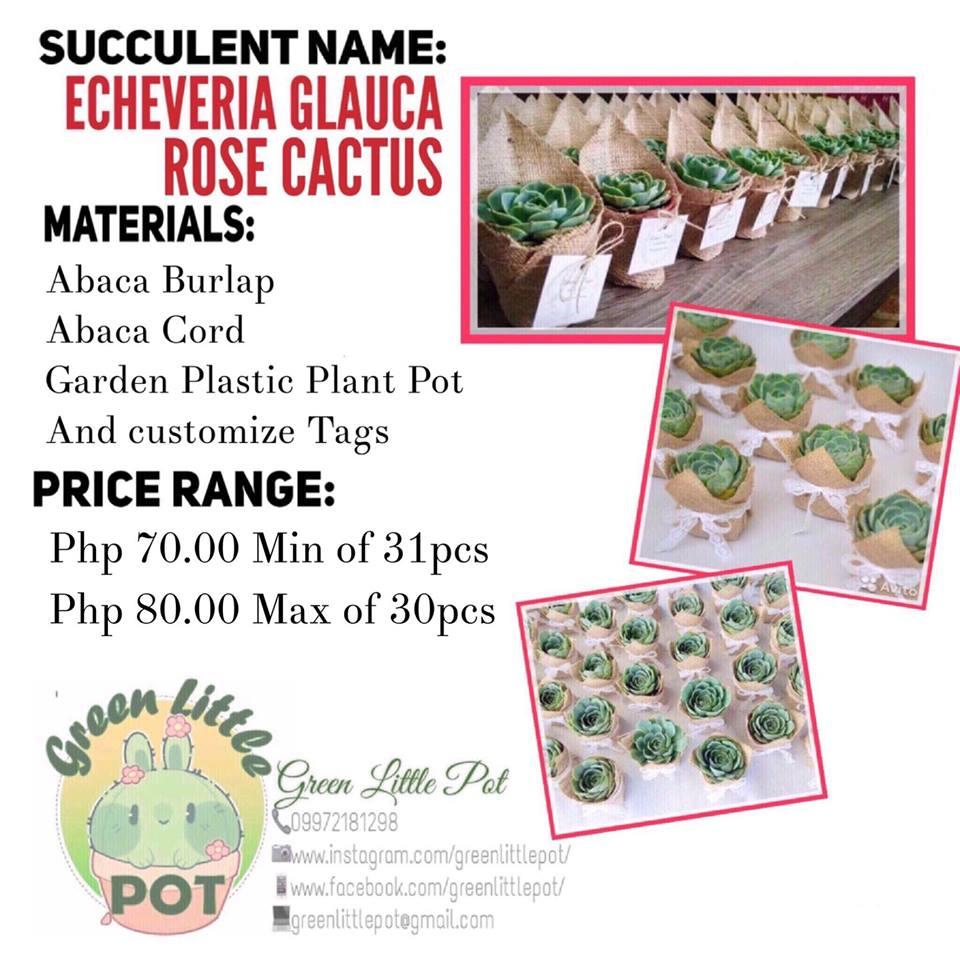 Succulents with Burlap