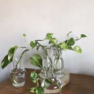 Glass Jars With Plants