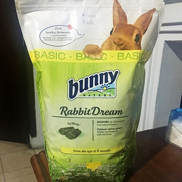 Bunny Nature Rabbit dream food