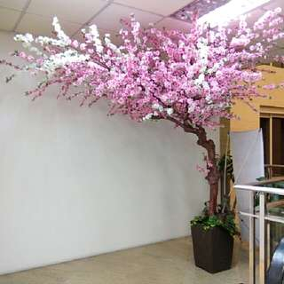 Cherry Blossoms / Wisteria - SALE/ RENTAL. Artificial Plants, Trees, Flowers