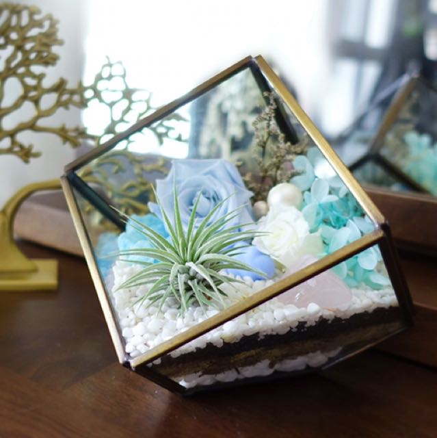 Aerium: Awe Cube With Air Plant & Preserved Flowers