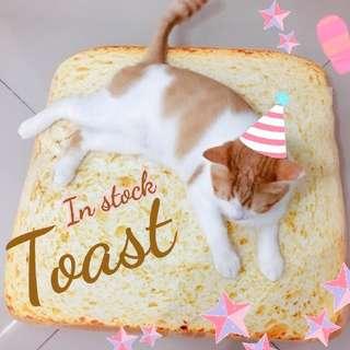 Oui.abi 🍞 Toast Bread bed  🍞 Fluffy & Sponge type