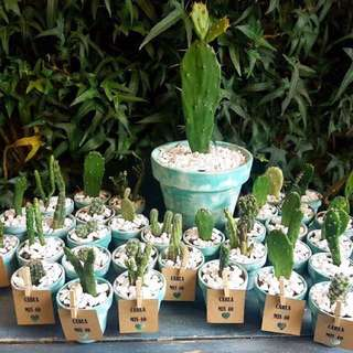 Mini Cactus Plant - Good for souvenirs, giveaways, and gifts