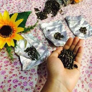 Sunflower 🌻 seeds