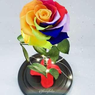 Beauty & the Beast   Preserved Rainbow Rose