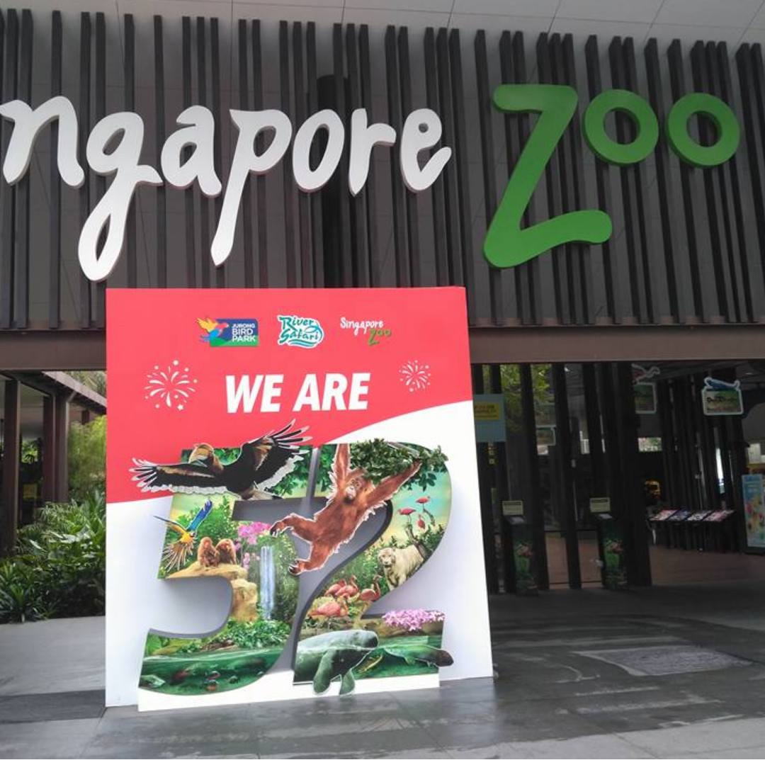 🐊 Singapore Zoo | River Safari | Night Safari | Jurong Bird Park 🐢