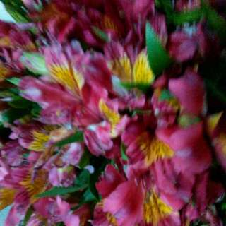 Real Flowers for Sale (Various Types)