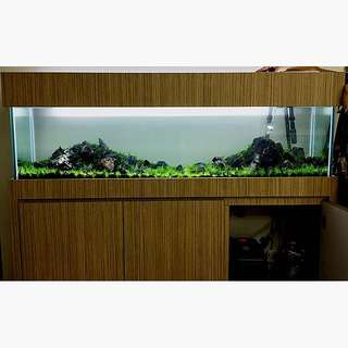 5ft Iwagumi scape for nursing home