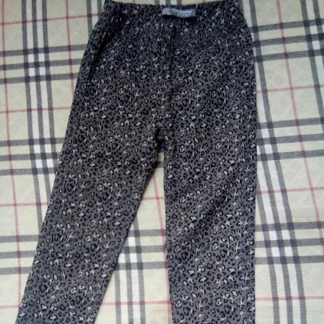 Terranova Animal Print Pants