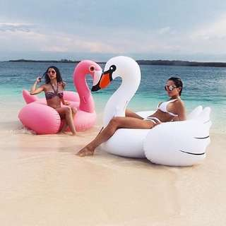 Pool Party - Floats With Delivery