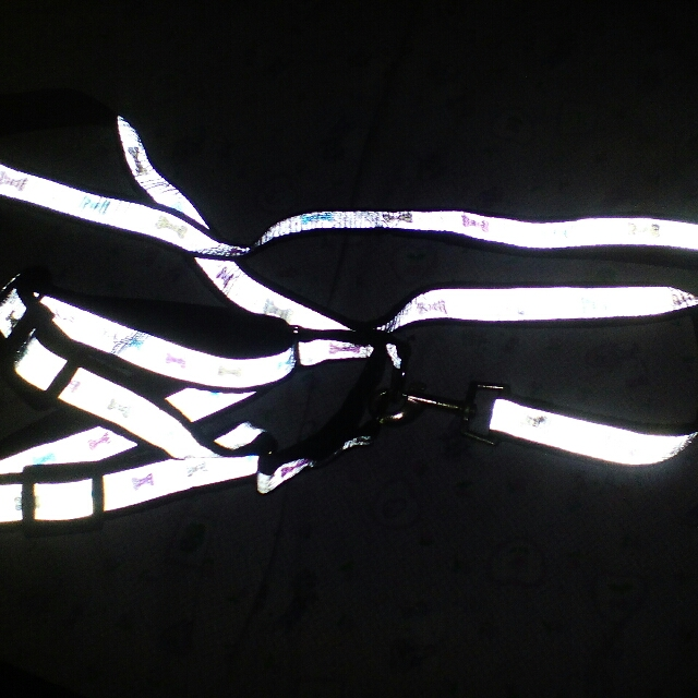 harness with leash reflecting