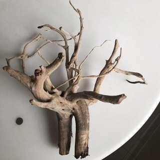 Unique Aquarium spider wood
