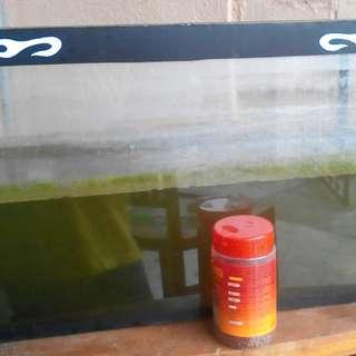 Aquarium 2 Feet Free Toman And Ikan Puyuh