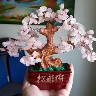 粉晶發財樹