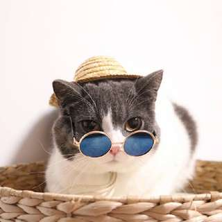 寵物 配件 貓咪 狗狗 嘻哈 墨鏡 太陽眼鏡@台北地下街