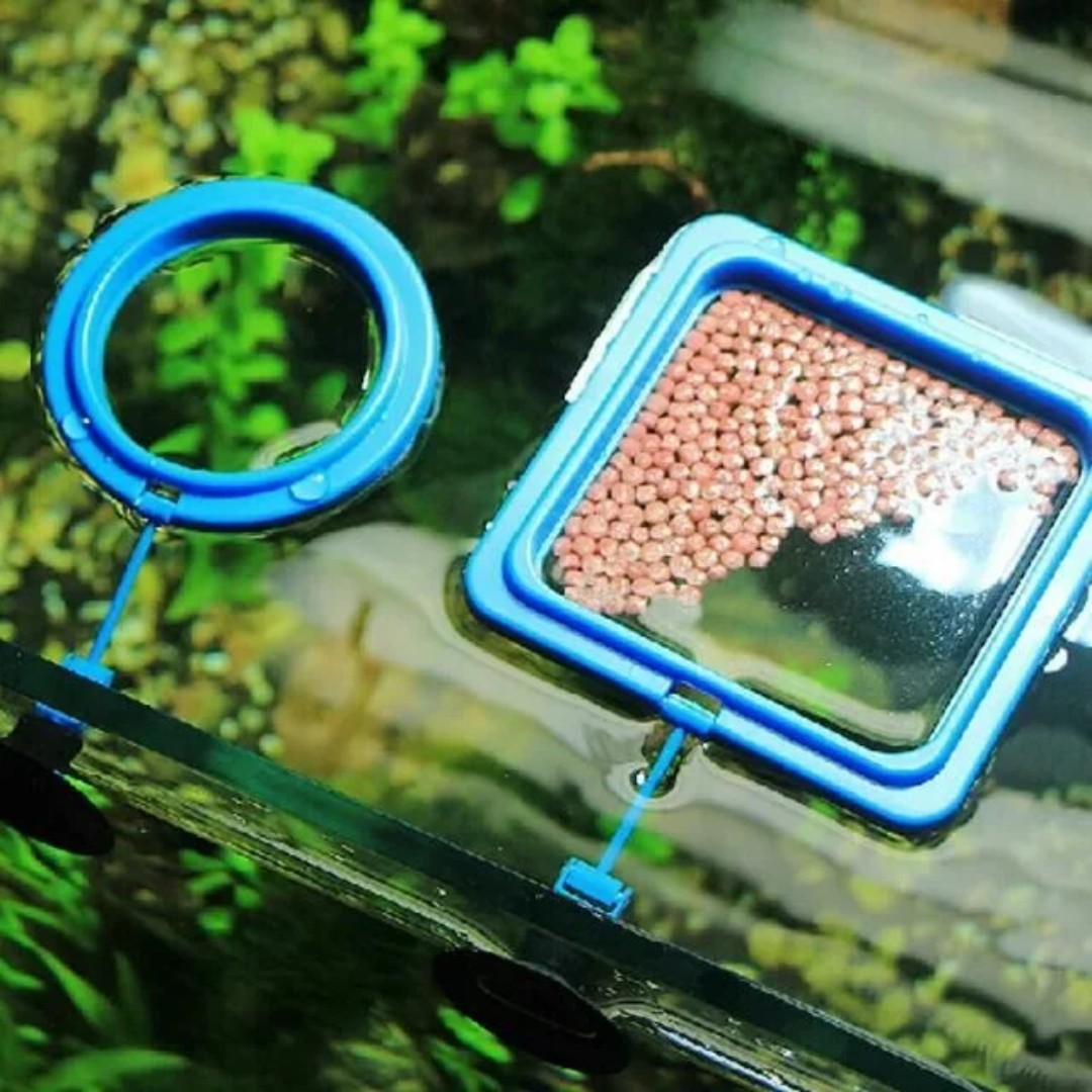 how to make a fish feeding ring