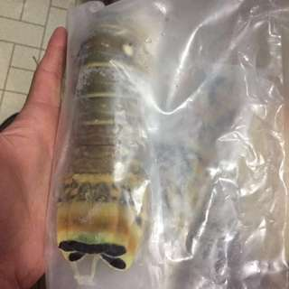 加勒比海龍蝦尾