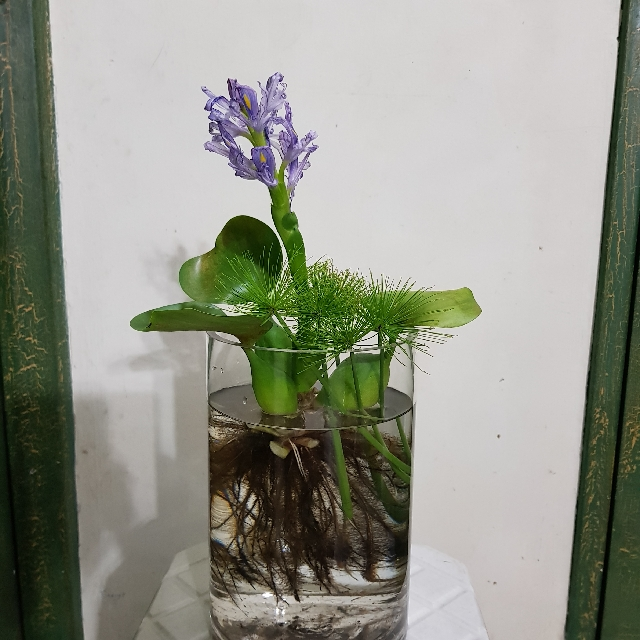 Plants Beautiful Glass Vase Different Size Different Shape With