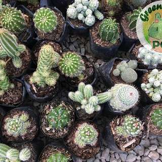 Cactus 🌵