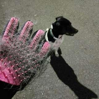 寵物清潔手套(無盒)