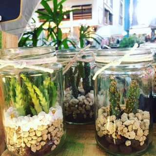 Cactus in terrarium